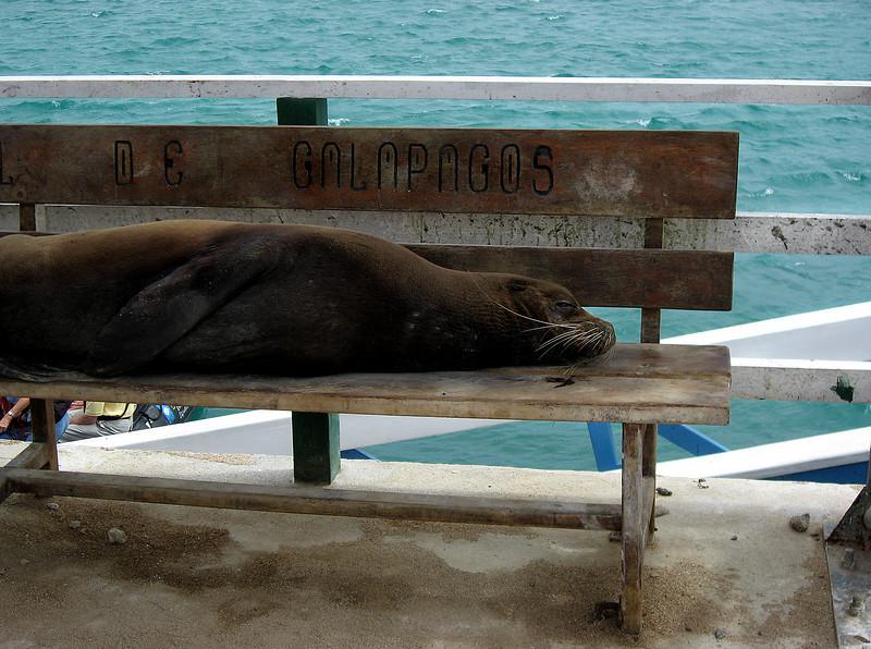 Galapagos mascot @ Baltra dock-Galapagos Islands, Ecuador 12-15-2007