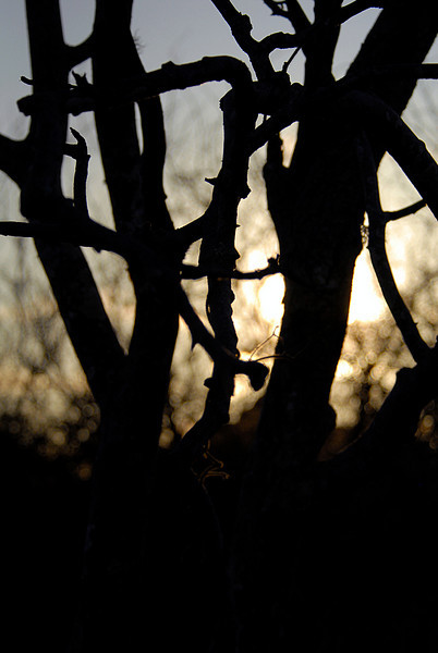 sunset & tree silhouette-Punta Cormorant-Floreana Island 12-17-2007