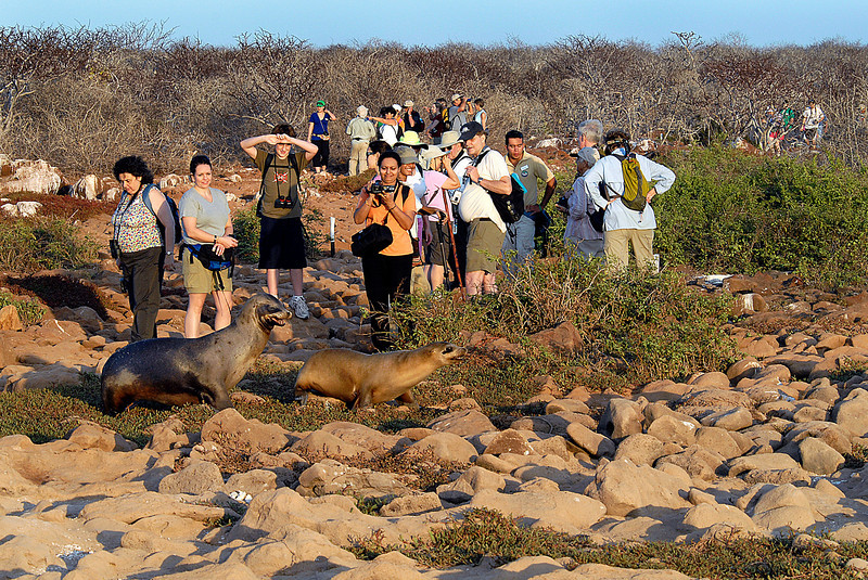 sea lion crossing on N  Seymour island-Galapagos 12-15-2007