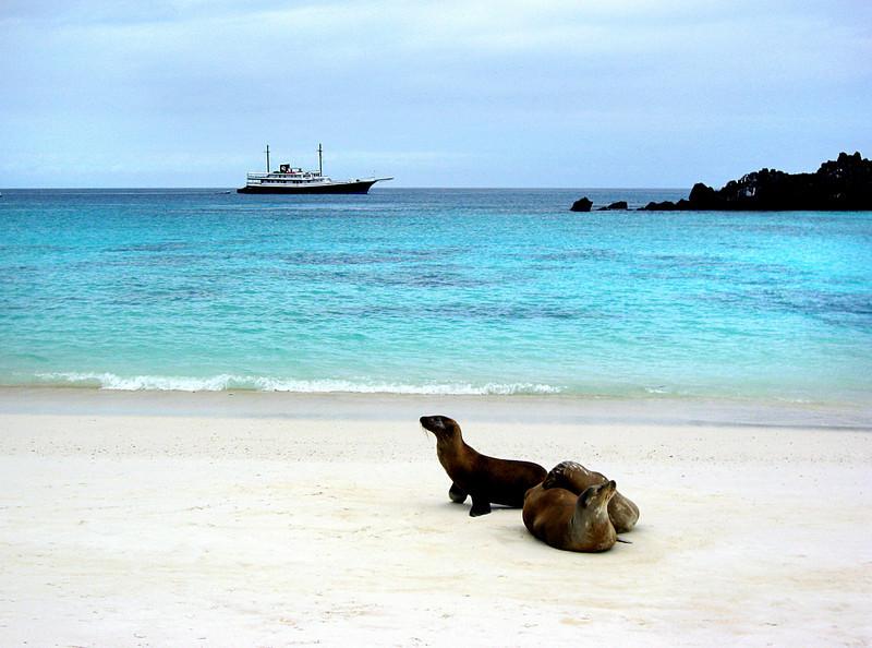 sea lions & ship-Gardner Bay-Espanola Island-Galapagos 12-16-2007