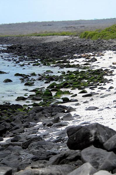 moss & lava rocks-Punta Suarez beach-Espanola Island 12-16-2007
