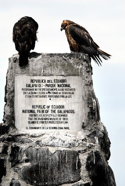 Galapagos hawks @ Punta Suarez, Espanola Island-Galapagos 12-16-2007