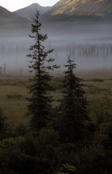 misty meadow of trees-Seward Hwy-Kenai Peninsula, AK 8-31-2007