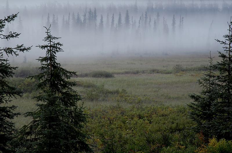 misty morning in mountain meadow along Seward Hwy, Kenai peninsula, AK 8-31-2007