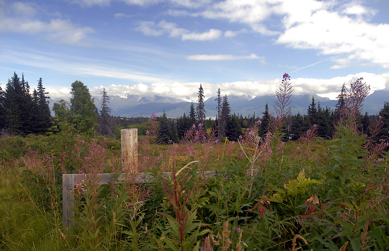 fireweed & mountainscape from East End Road-Homer, AK 9-1-2007