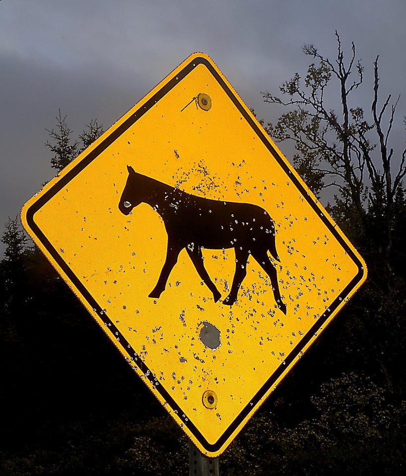 buck-shot road sign near Sterling, Alaska 9-2-2007
