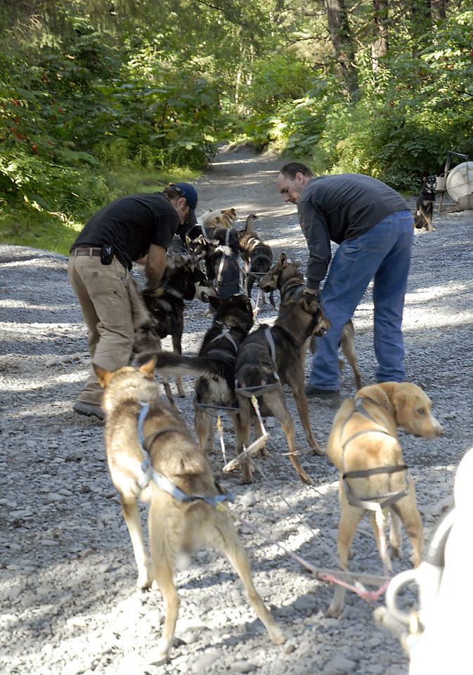 mushers harnessing team for Ididaride-Seward, AK 8-31-2007