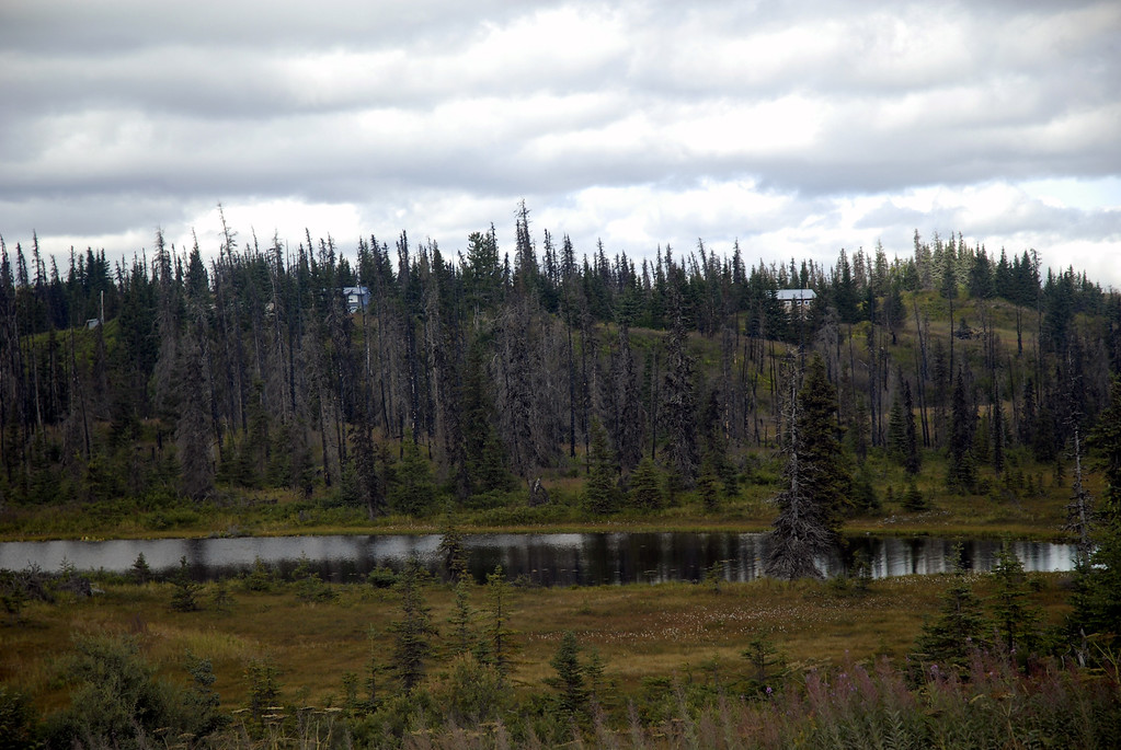 dead forest of spruce trees reflecting in pond along East End Road-Homer, Alaska 9-1-2007