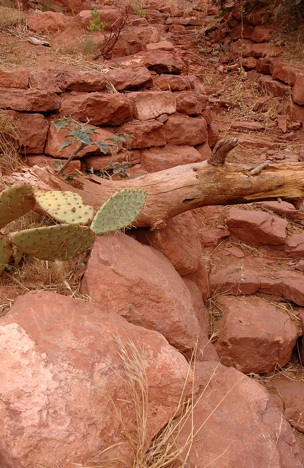 prickly pear cactus on red rocks-Sedona, AZ 7-9-04