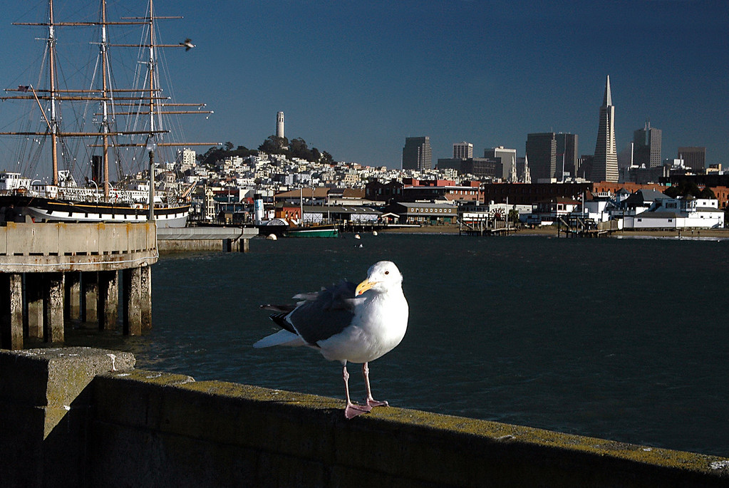 Balclutha, seagull, Fisherman's Wharf, Coit Tower, Transamerica Pyramid-San Francisco, CA 2-14-06