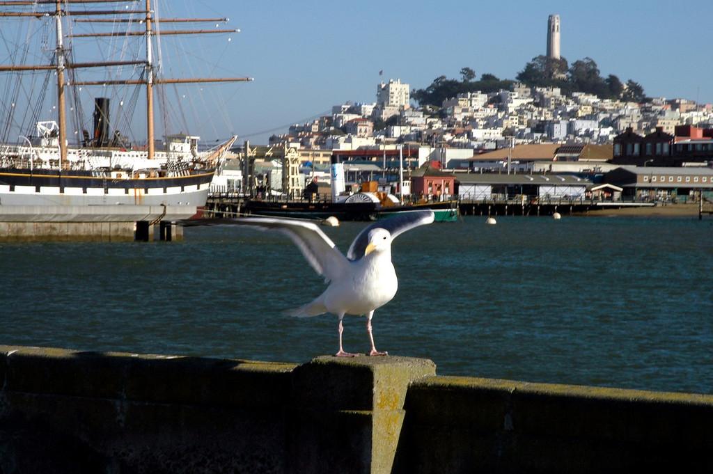 sea gull, Fisherman's Wharf, Tower Hill, Coit Tower-San Francisco, CA 2-14-06