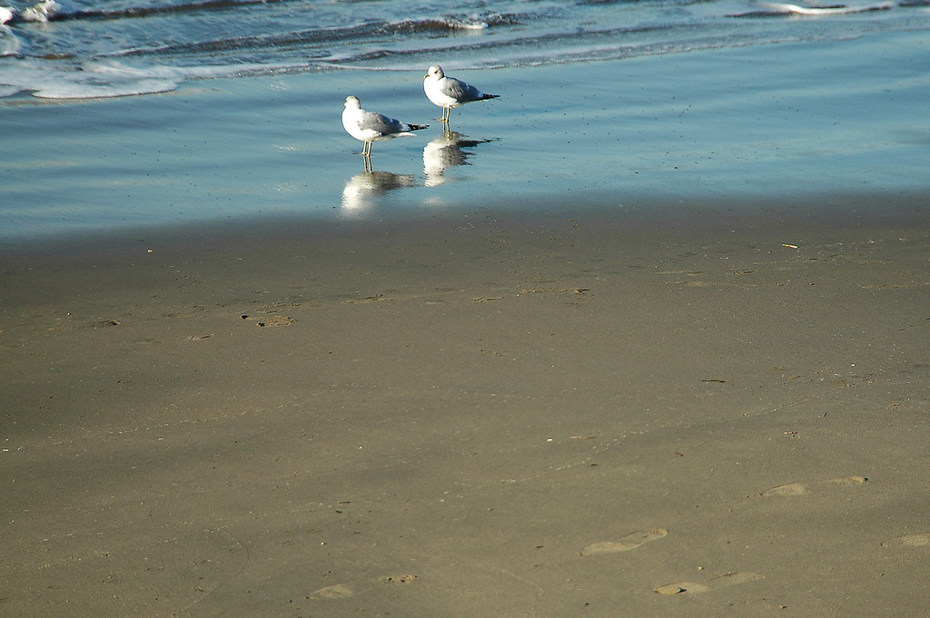 gulls reflecting-San Francisco, CA 2-14-06