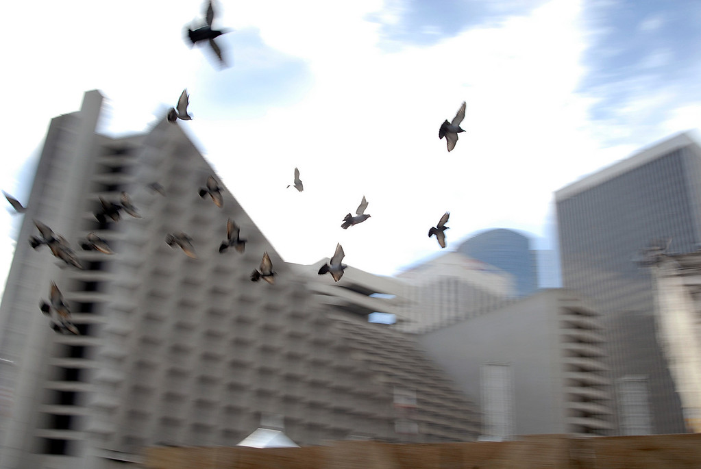 pigeons soaring thru Embarcadero-San Francisco 11-12-2007