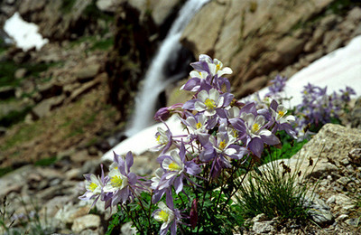 Chasm Lake hike - alpine flora & waterfall - CO 1997 July