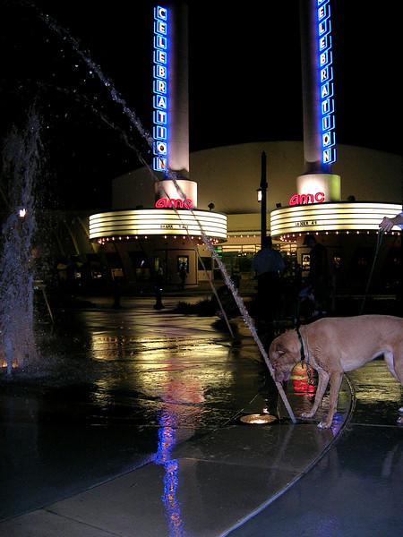 Bailey sizing up the fountain-Celebration, FL 10-11-04