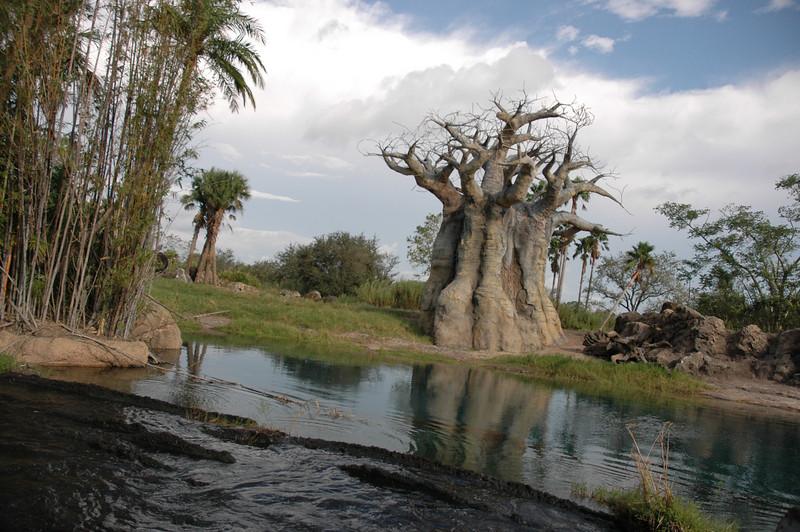 Kilimanjaro Safari baobab tree-Animal Kingdom-Florida 10-15-04