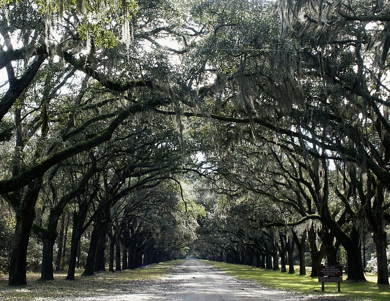 oak alley @ Wormsloe Plantation - Isle of Hope, Georgia 2002