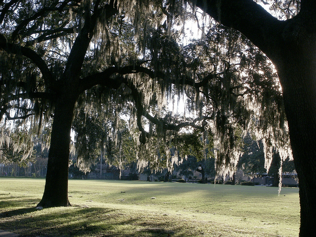 Spanish moss in Forsyth Park-Savannah