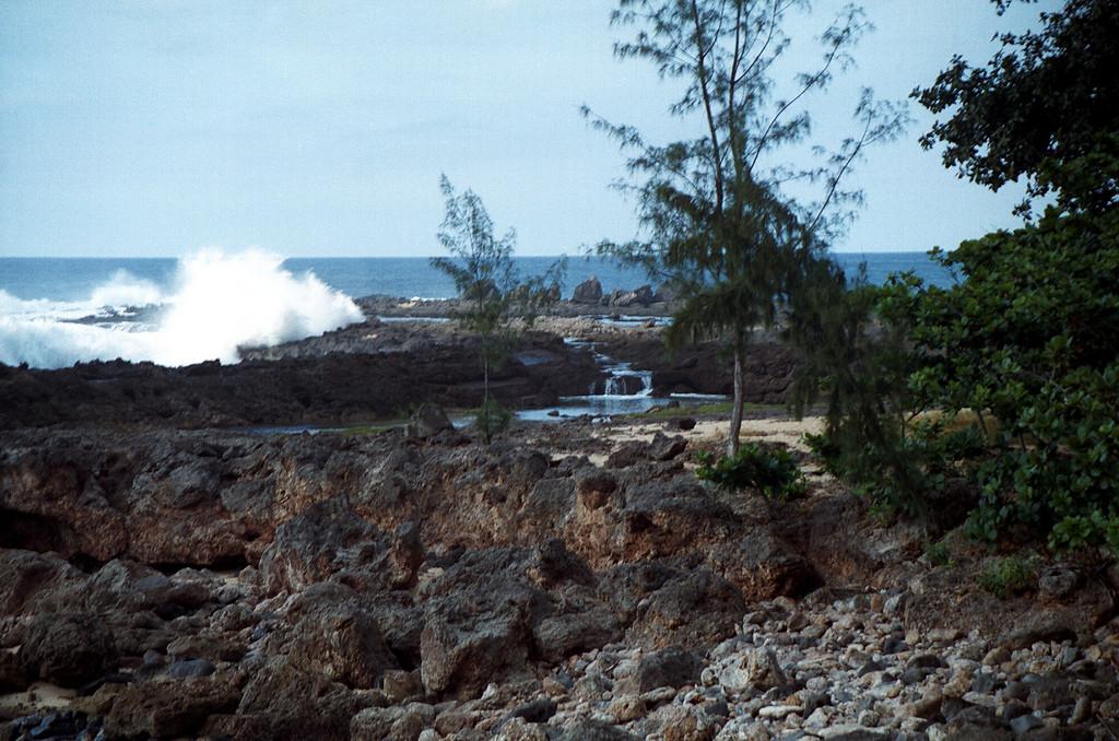 Shark's Cove waterwalls 1999 Dec