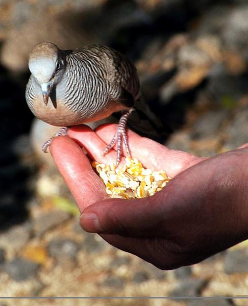 Mom K  - 'a bird in the hand   ' 1999 Feb