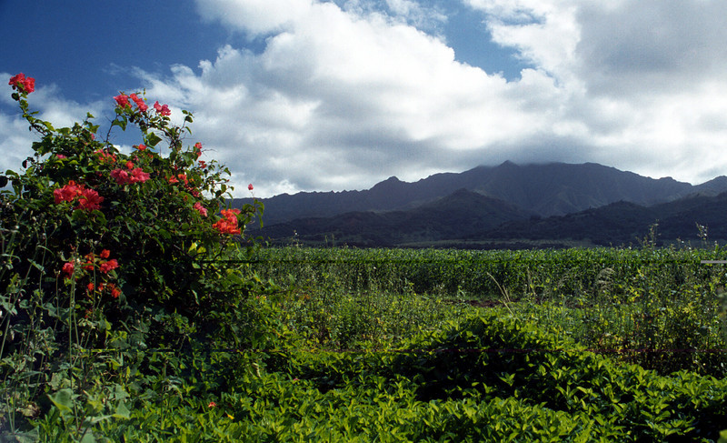Wai'anae mtns & flora from Farr Hwy 2000 Jan