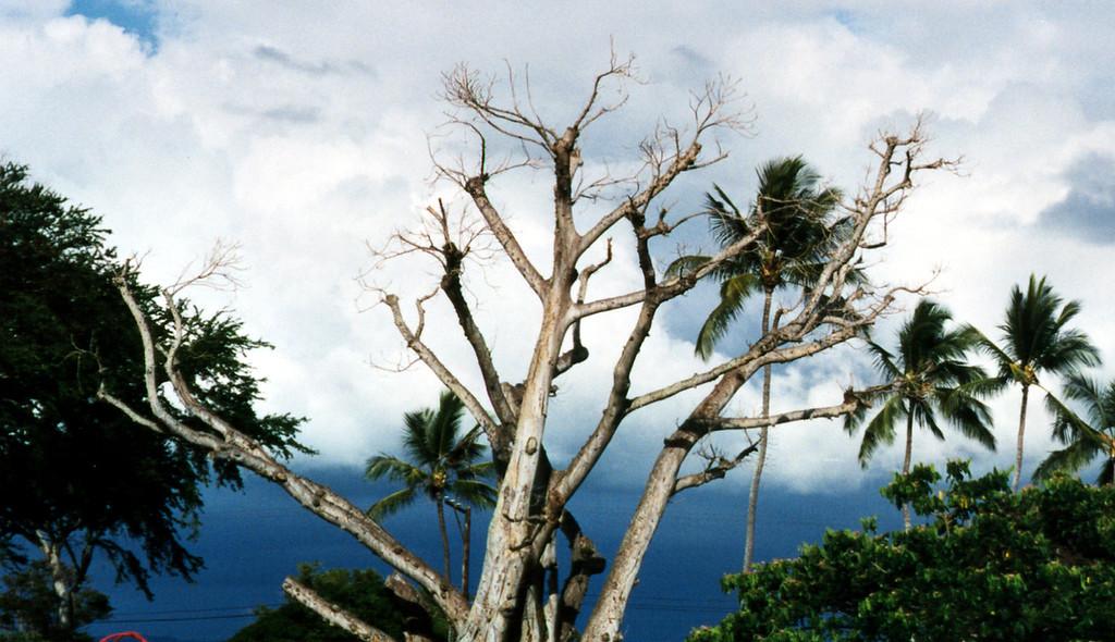 Hale'iwa skies 1999 May