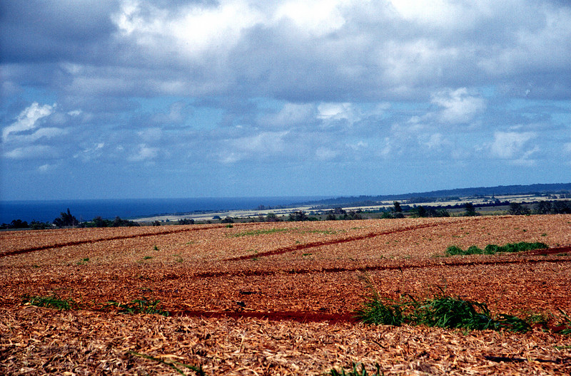 pineapple-fields-above-the-sea - central O'ahu 2000 Jan