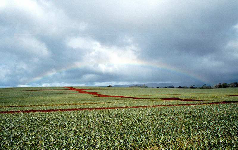 rainbow over pineapple fields - central O'ahu 2000 Jan