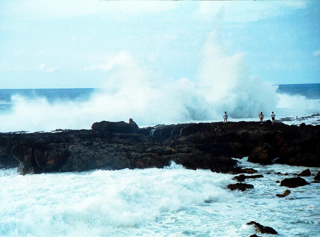 surf @ Shark's Cove 1999 Dec