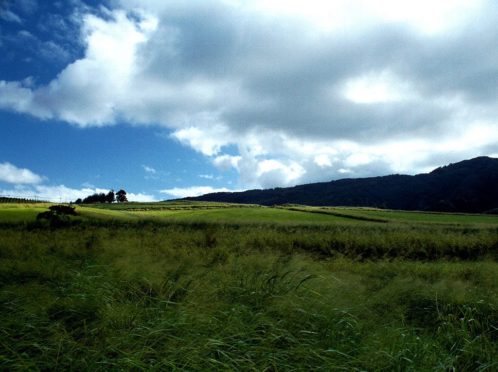 Waialua fields off Farrington Highway, O'ahu 2000