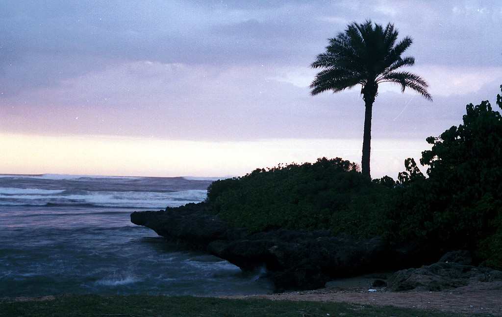 Ali'i Beach Park cove & palm @ sunset - Hawaii 2000 Feb