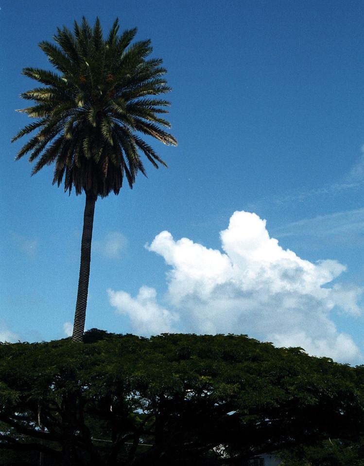 palmsicle - Hawaii 1999 Sept