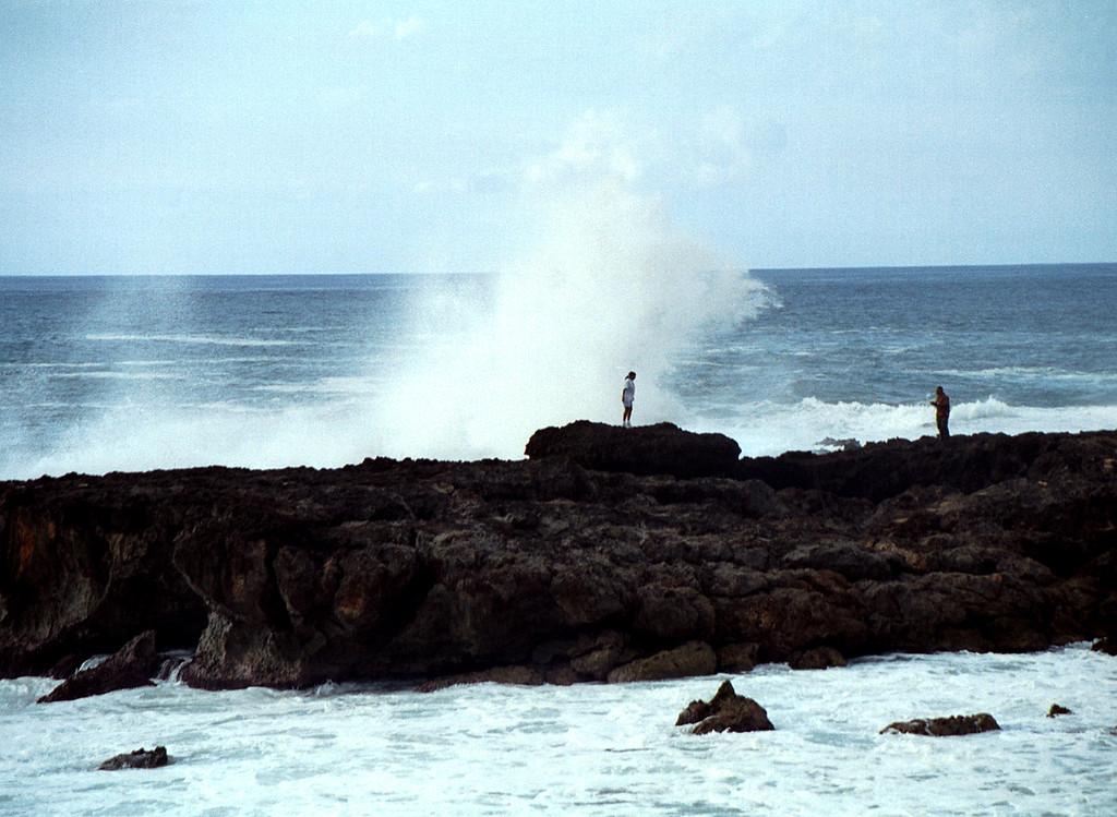 Shark's Cove surf  1999 Dec