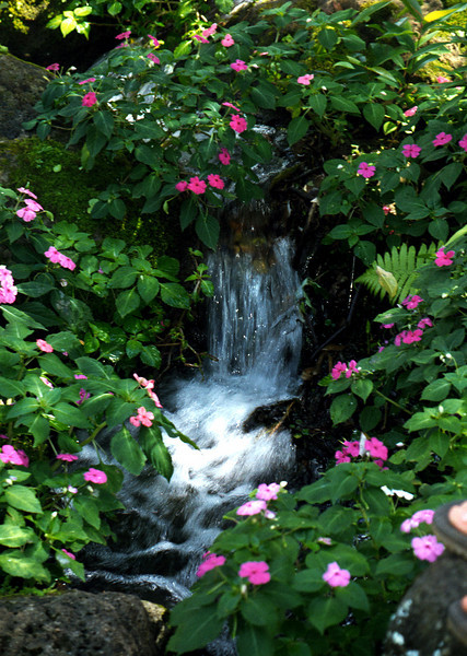 waterfall (mini) & flowers @ Waimea Valley 1999 Feb