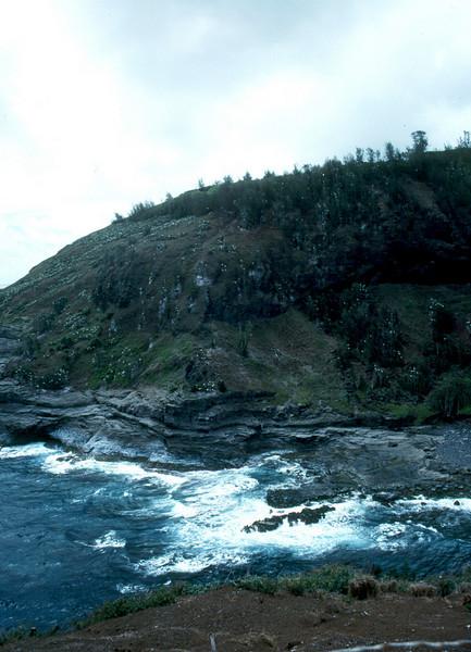 Kauai - bird-covered hillside 2000 May