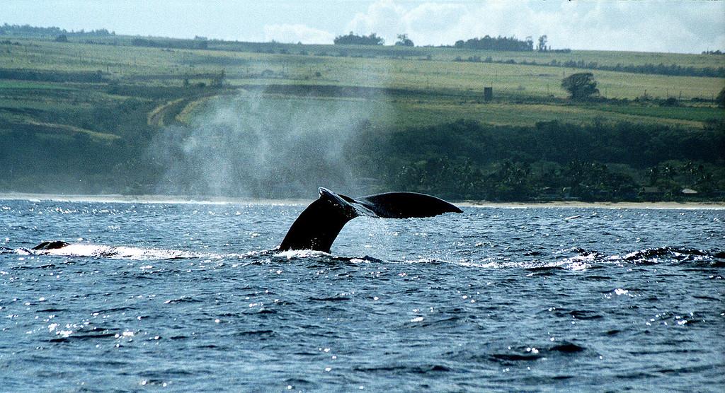 whale tail - Hale'iwa 1999 Feb