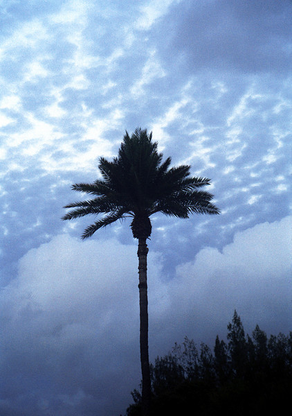 Ali'i palm tree & dappled sky - Hale'iwa, HI 2000 Jan