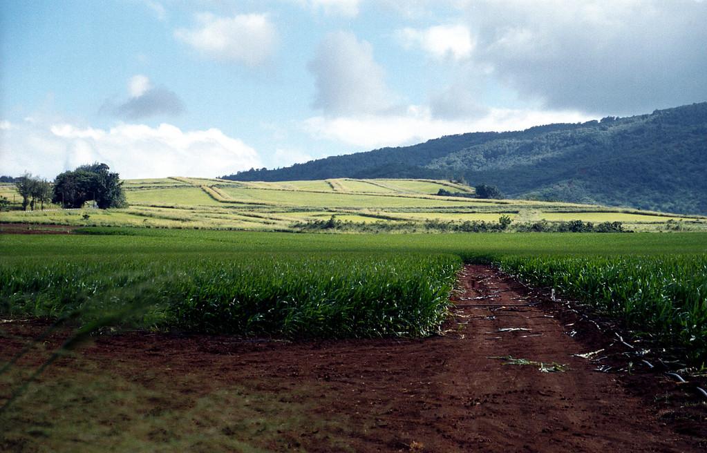 fields along Farrington Hwy - Waialua, HI  2000 Jan