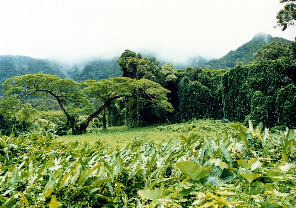 Nu'uanu Pali area - O'ahu 1999 July