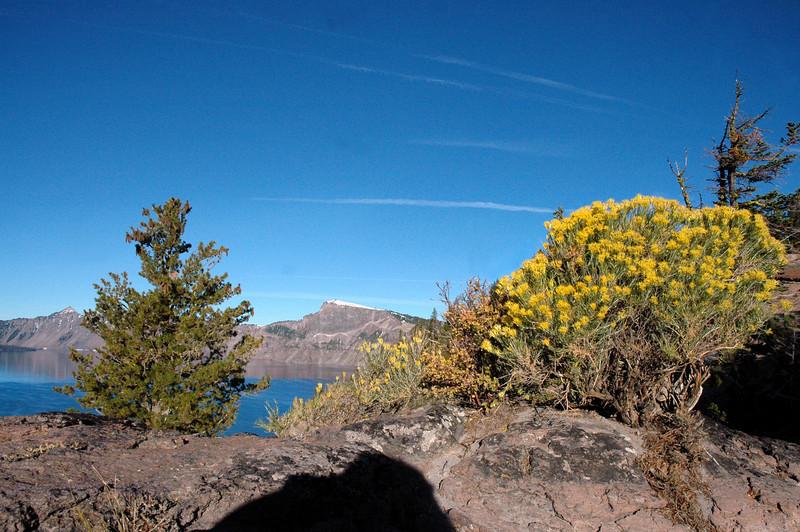 rim flora-Crater Lake, OR 9-17-2006