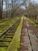 mossy old railroad tracks near Mill Pond, Snoqualmie, WA 3-25-2011