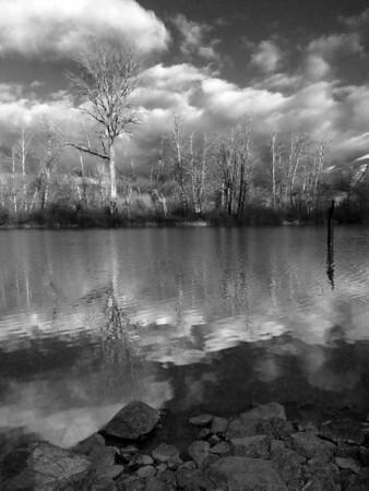 tree reflecting in Mill Pond-bw Snoqualmie, WA 1-19-2011