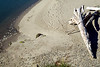 footprints in the sand-Strait of Juan de Fuca-Olympic Peninsula, WA 7-2008