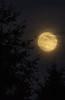 moonrise-North Bend, WA 8-30-2012