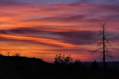 sunset with dead tree-Snoqualmie Ridge, WA 7-16-2015