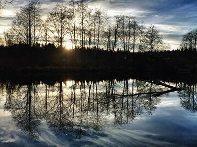 Sammamish Slough-Marymoor Park-Redmond, WA 1-14-2015