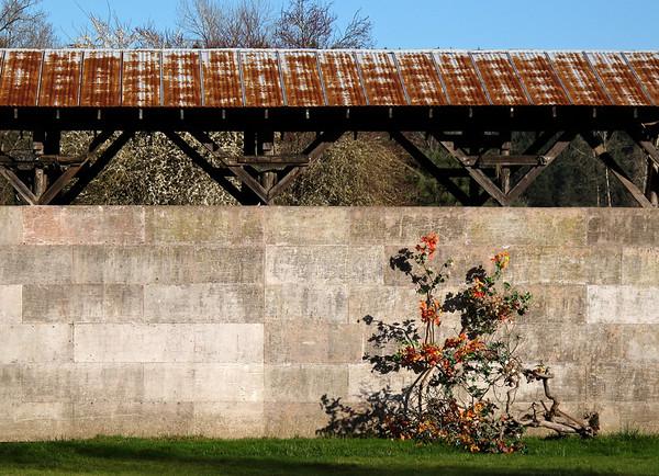 bush, concrete wall, rusty roof-Carnation, WA 2-2010