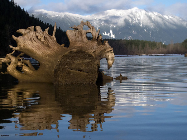 felled trunk and snowy Mount Si-Rattlesnake Lake-North Bend, WA 1-23-2012