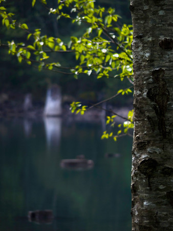 tree bark & emerald waters of Rattlesnake Lake-North Bend, WA 4-29-2010