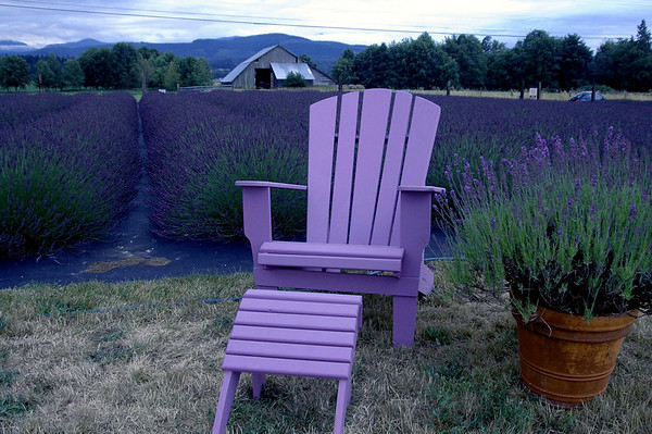 adirondack chair-Angel Farm lavender field-Sequim, WA 7-2006